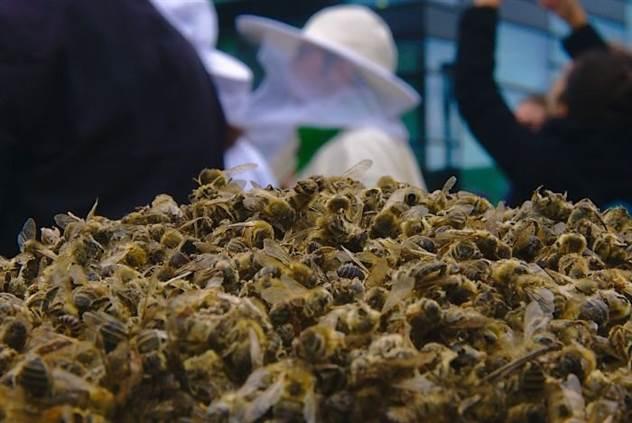 500 миллионов пчел погибли в Бразилии в течение трех месяцев ( 8 фото )