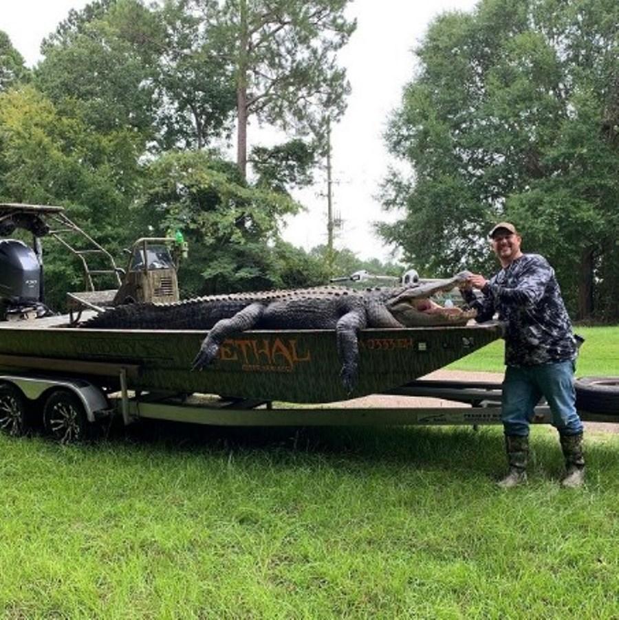 В штате Джорджия группа смельчаков поймали аллигатора исполинских размеров