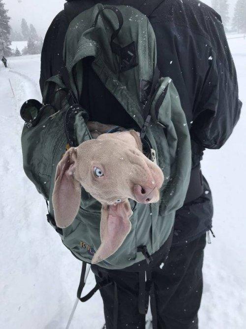 Забавные животные, которые подарят позитив и улыбку (31 фото)