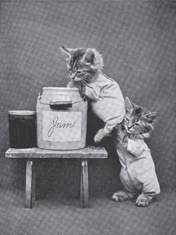 Ретро фотографии котиков в человеческих ситуациях