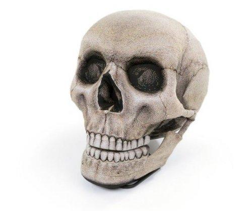 Непростой череп (6 фото)