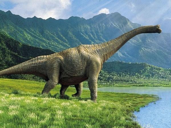 Древние животные, которые были открыты в музеях