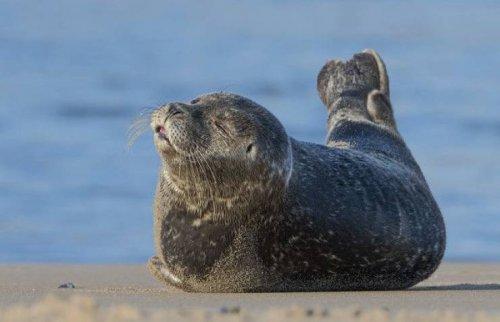 Животные которые умеют отдыхать (20 фото)