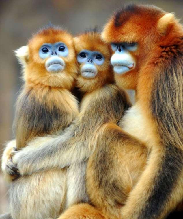 Забавные картинки с животными. Подборка zabavatut-zabavatut-08290430102019-0 картинка zabavatut-08290430102019-0