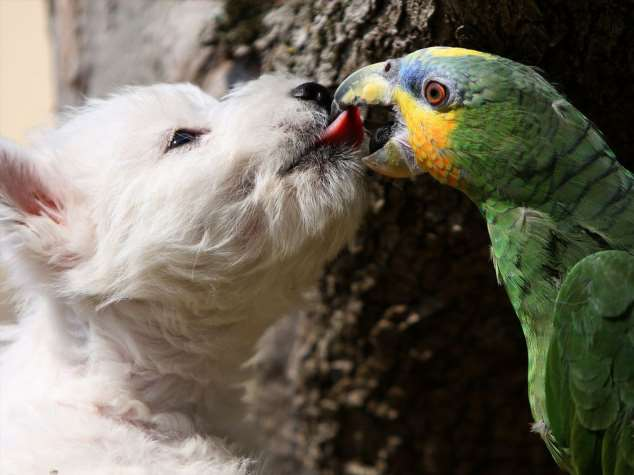Забавные картинки с животными. Подборка zabavatut-zabavatut-08290430102019-11 картинка zabavatut-08290430102019-11