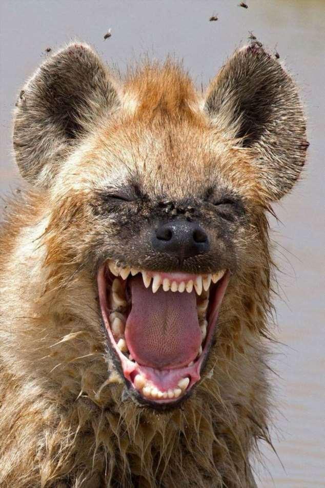 Забавные картинки с животными. Подборка zabavatut-zabavatut-08290430102019-12 картинка zabavatut-08290430102019-12