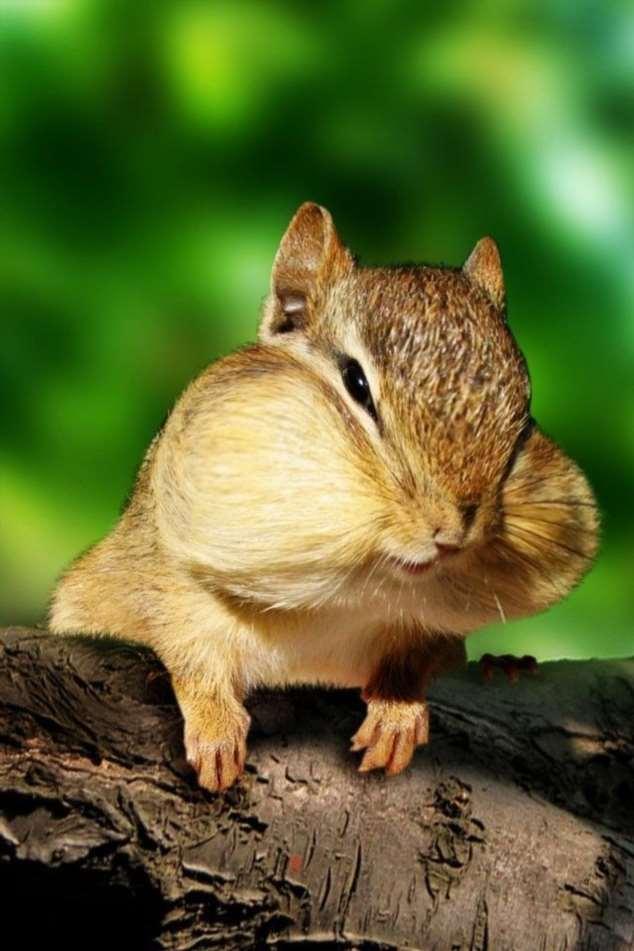 Забавные картинки с животными. Подборка zabavatut-zabavatut-08290430102019-15 картинка zabavatut-08290430102019-15