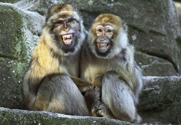 Забавные картинки с животными. Подборка zabavatut-zabavatut-08290430102019-16 картинка zabavatut-08290430102019-16