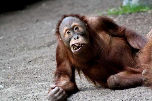 Забавные картинки с животными. Подборка zabavatut-zabavatut-08290430102019-18 картинка zabavatut-08290430102019-18
