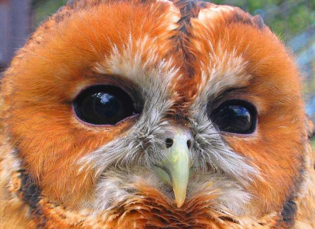 Забавные картинки с животными. Подборка zabavatut-zabavatut-08290430102019-2 картинка zabavatut-08290430102019-2