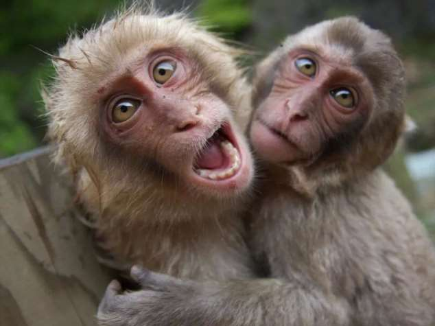 Забавные картинки с животными. Подборка zabavatut-zabavatut-08290430102019-6 картинка zabavatut-08290430102019-6