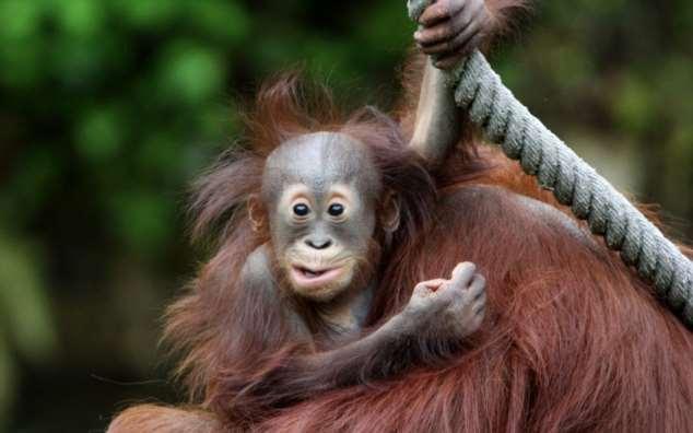 Забавные картинки с животными. Подборка zabavatut-zabavatut-08290430102019-9 картинка zabavatut-08290430102019-9
