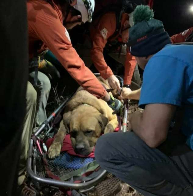 Спасательный отряд спустил с горы пострадавшую собаку