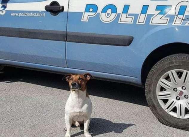 Мафия в Италии оценила голову полицейского пса в пять тысяч евро