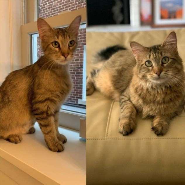 Коты и собаки до и после того, как нашли новых хозяев