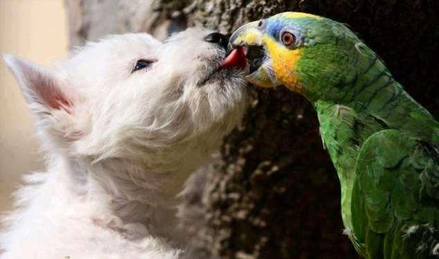 Забавные картинки с животными. Подборка №zabavatut-29070405112019