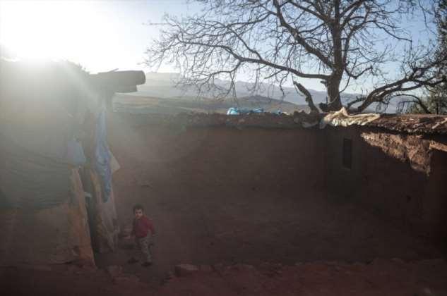 Сбор шафрана в Марокко ❘ фото + видео