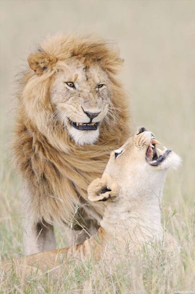 Забавные картинки с животными. Подборка №zabavatut-39000420112019