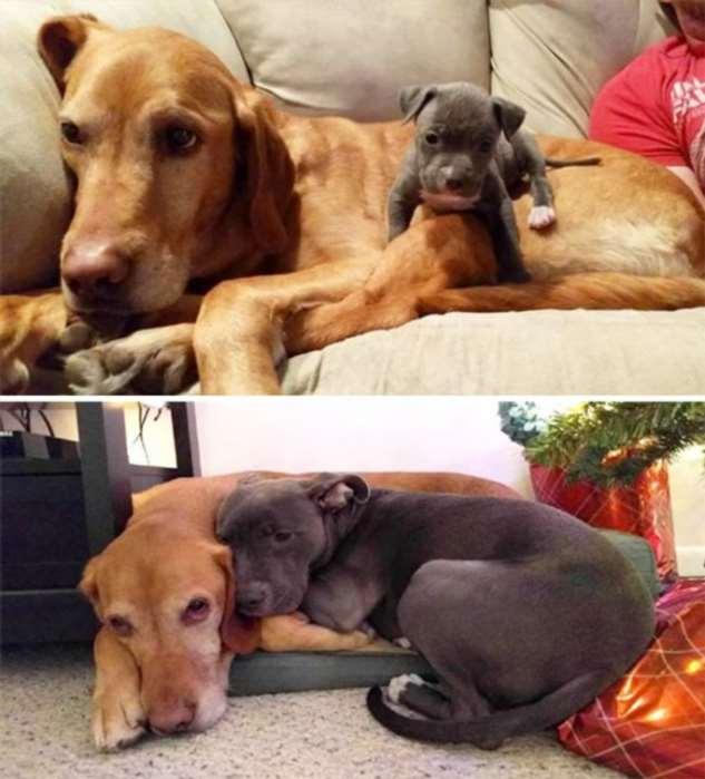 Как же быстро взрослеют собаки