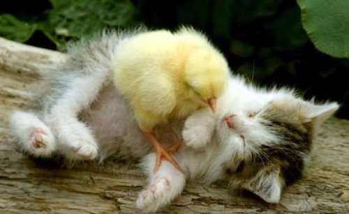 Потому что настоящая дружба не подчиняется правилам (11 фото)