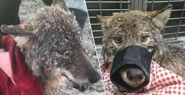 Рабочие спасли из ледяной ловушки собаку, как они думали …