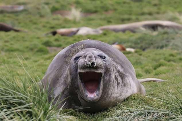 Забавные картинки с животными. Подборка №zabavatut-49070405112019
