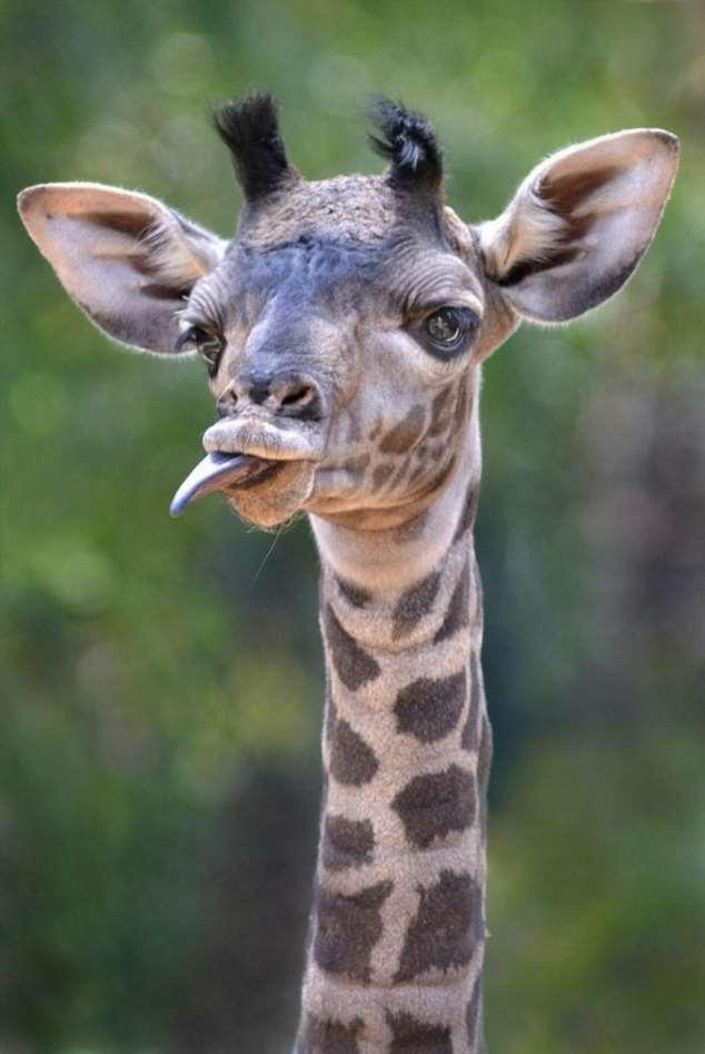 Фото животные смешные картинки