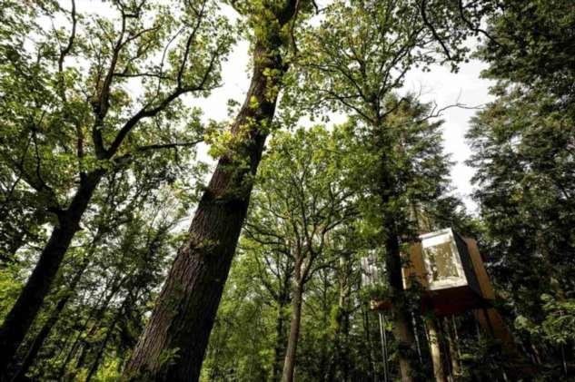 Скандинавский минимализм домика на дереве в отеле Lovtag ❘ фото
