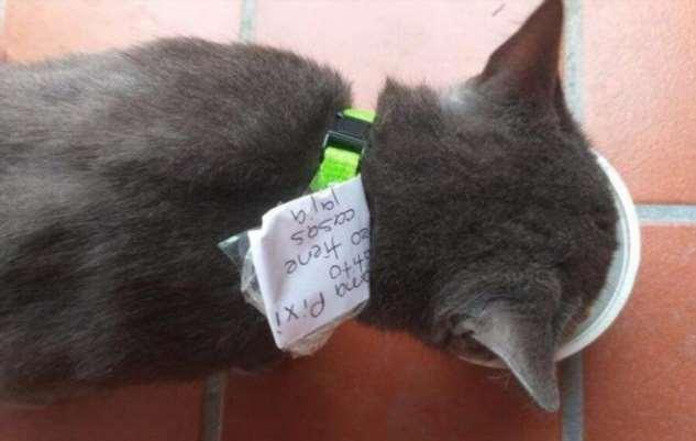 Отлично устроился: мексиканский кот живет на два дома