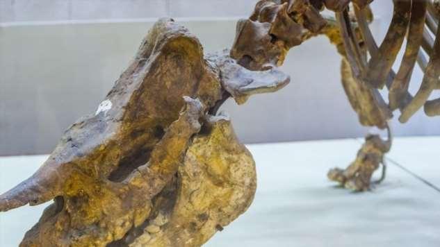Самые необычные динозавры, которые жили на территории современной России