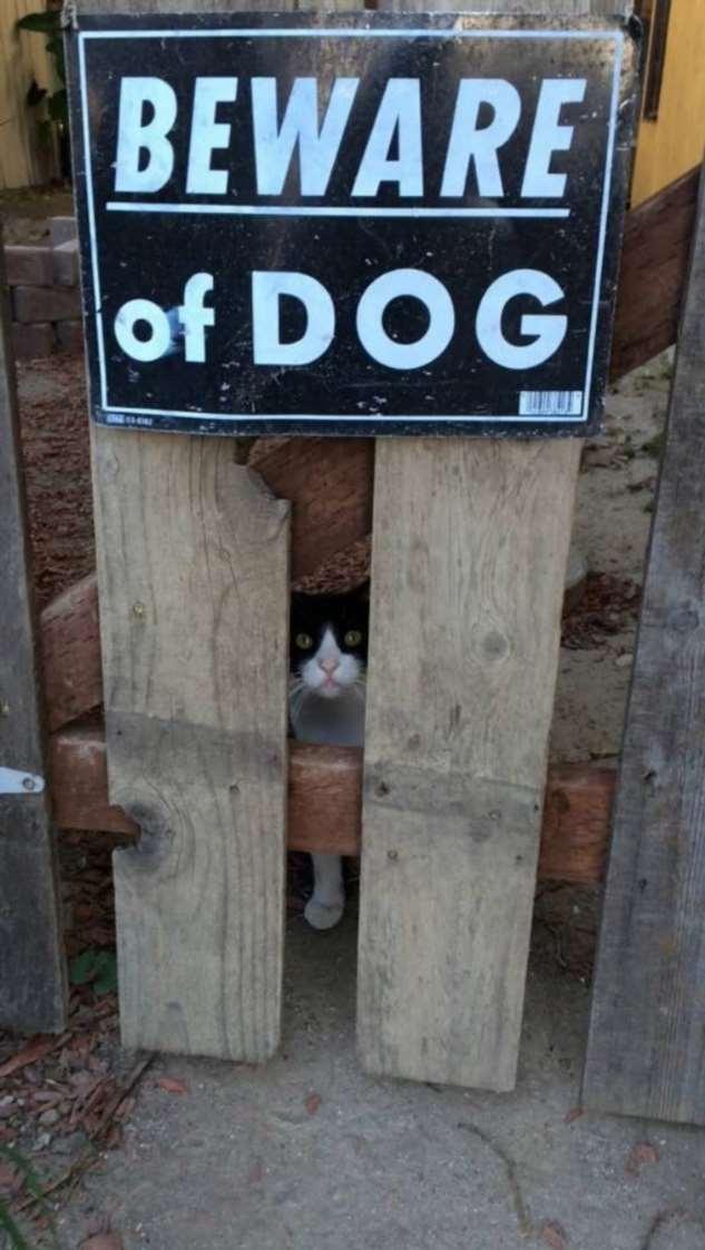 Милые пёсели и таблички «Осторожно, злая собака!»