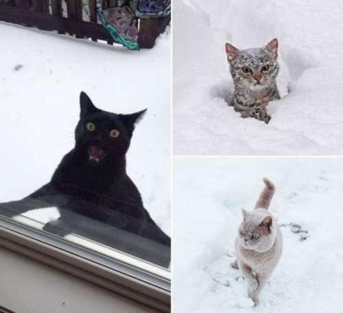 Фото кошек, удивленных первым снегом (25 фото)