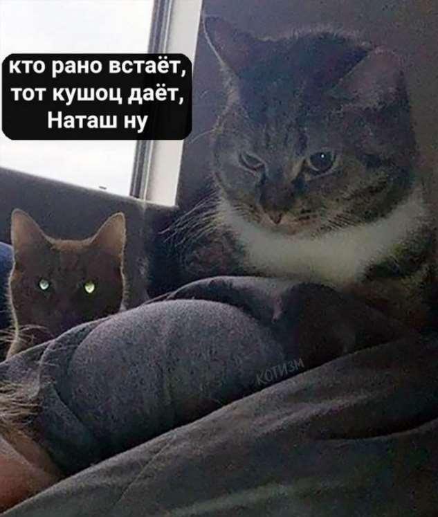 «Наташ, ты спишь?!»: и так каждое доброе утро