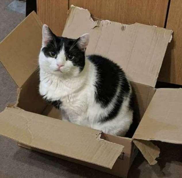 Эксперимент: как отреагирует кот, если залезть в его коробку (4 фото)