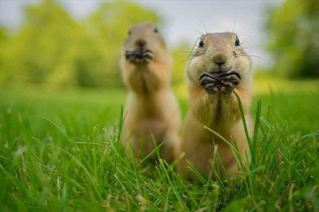 Забавные картинки с животными. Подборка №zabavatut-08020716012020