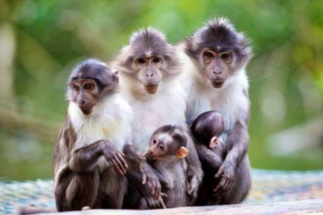 Забавные картинки с животными. Подборка zabavatut-zabavatut-08020716012020-10 картинка zabavatut-08020716012020-10