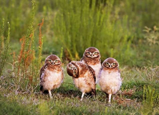 Забавные картинки с животными. Подборка zabavatut-zabavatut-08020716012020-16 картинка zabavatut-08020716012020-16