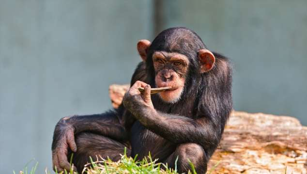 Забавные картинки с животными. Подборка zabavatut-zabavatut-08020716012020-17 картинка zabavatut-08020716012020-17