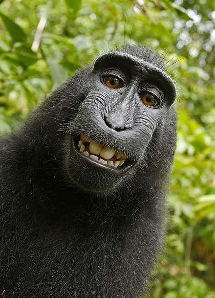 Забавные картинки с животными. Подборка zabavatut-zabavatut-08020716012020-2 картинка zabavatut-08020716012020-2