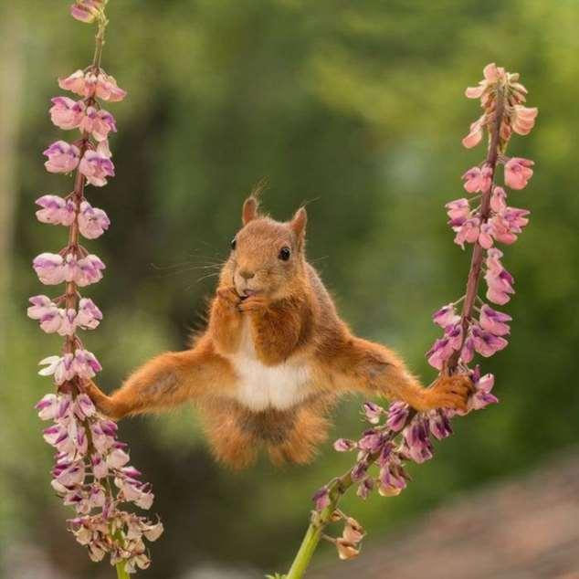 Забавные картинки с животными. Подборка zabavatut-zabavatut-08020716012020-3 картинка zabavatut-08020716012020-3