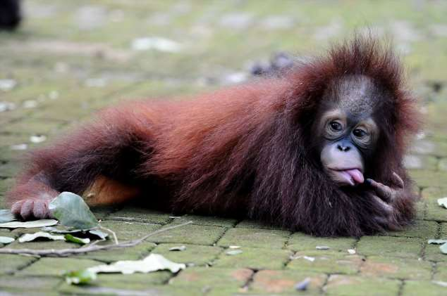Забавные картинки с животными. Подборка zabavatut-zabavatut-08020716012020-8 картинка zabavatut-08020716012020-8