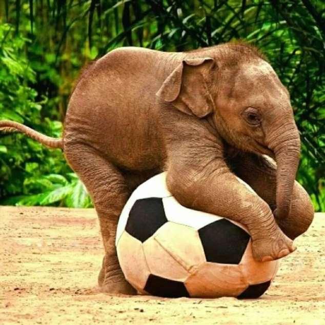 Забавные картинки с животными. Подборка zabavatut-zabavatut-24060407012020-10 картинка zabavatut-24060407012020-10