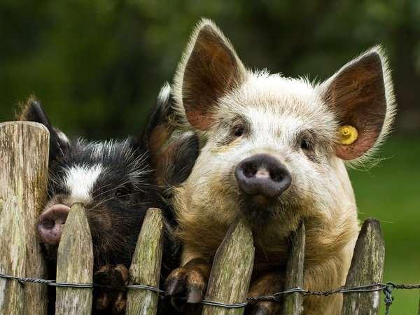 Забавные картинки с животными. Подборка zabavatut-zabavatut-24060407012020-12 картинка zabavatut-24060407012020-12