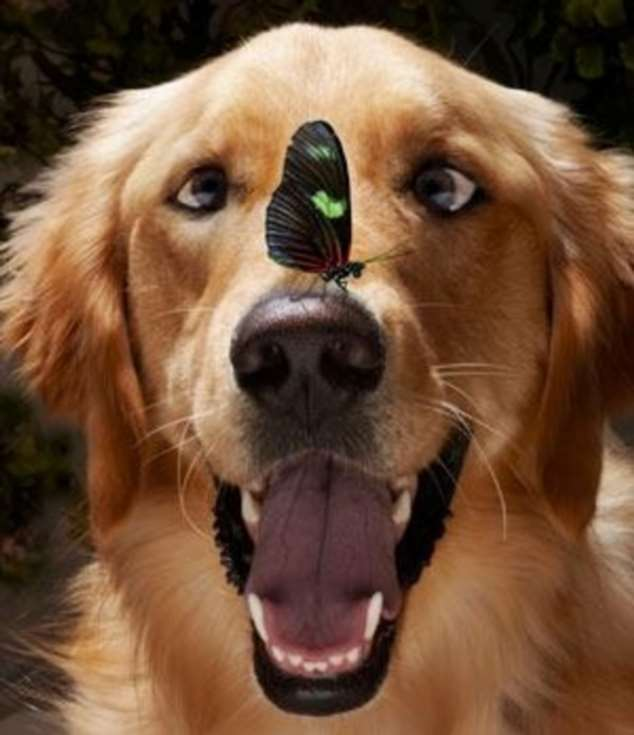 Забавные картинки с животными. Подборка zabavatut-zabavatut-24060407012020-15 картинка zabavatut-24060407012020-15