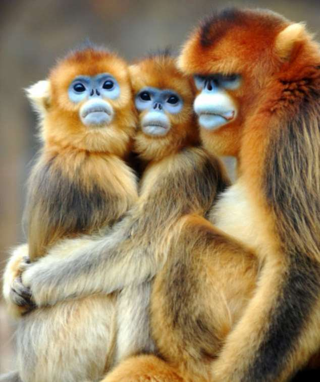 Забавные картинки с животными. Подборка zabavatut-zabavatut-24060407012020-17 картинка zabavatut-24060407012020-17