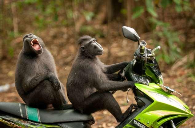 Забавные картинки с животными. Подборка zabavatut-zabavatut-24060407012020-2 картинка zabavatut-24060407012020-2
