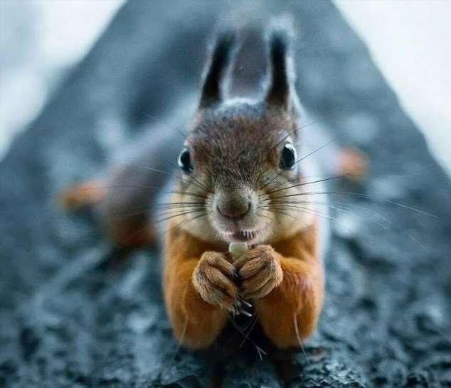 Забавные картинки с животными. Подборка zabavatut-zabavatut-24060407012020-9 картинка zabavatut-24060407012020-9