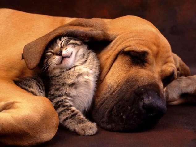 Забавные картинки с животными. Подборка №zabavatut-30090404012020