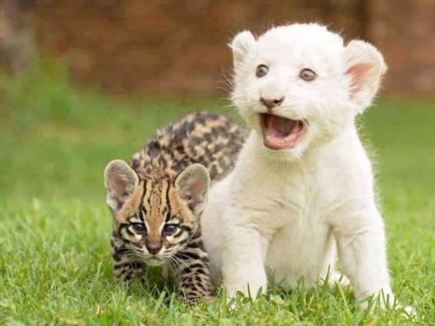 Забавные картинки с животными. Подборка zabavatut-zabavatut-30090404012020-1 картинка zabavatut-30090404012020-1