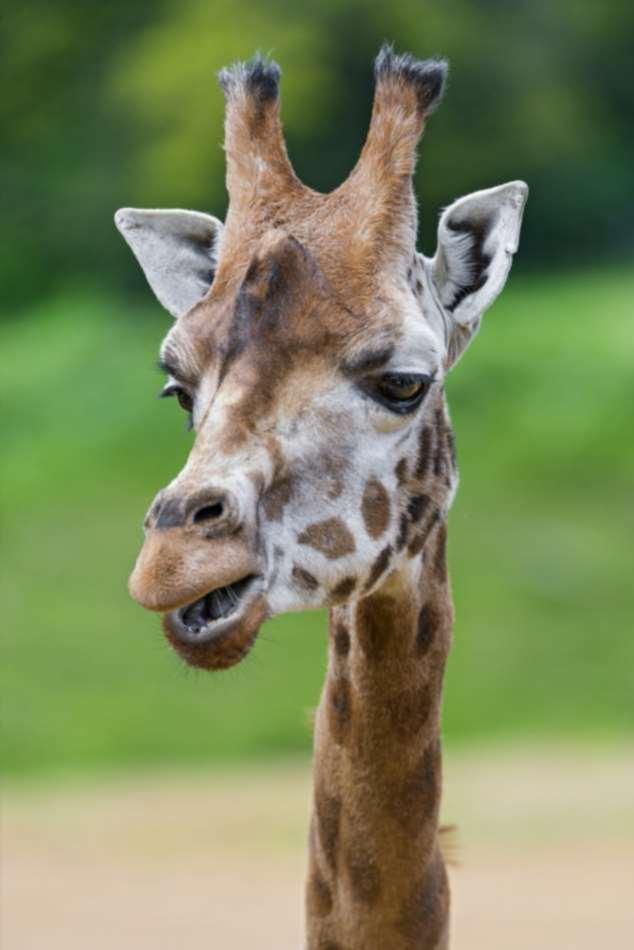 Забавные картинки с животными. Подборка zabavatut-zabavatut-30090404012020-18 картинка zabavatut-30090404012020-18